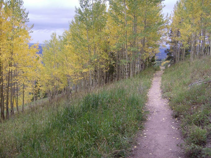 A hiking trail midway up Vail Mountain in Vail, Colorado.