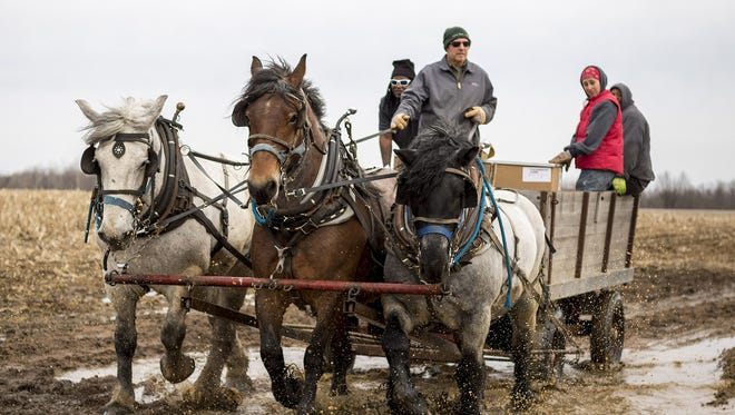 Jason Julian, a subcontractor for U.S. Cellular, uses a team of horses to transport supplies to a U.S. Cellular phone tower through muddy, uneven terrain in Portage County, Wis. U.S. Cellular has turned to draft horses for hauling equipment up steep wooded hillsides, places where trucks have gotten stuck in the mud and all-terrain vehicles haven't been up to the job.