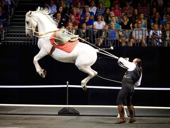Lipizzaner Stallions, Spanish Andalusians, Friesians, Arabian breeds and Quarter horses will be on display at The Gala of the Royal Horses.
