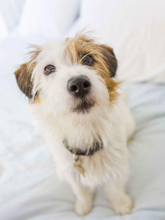 Generic Stock Image - Dog