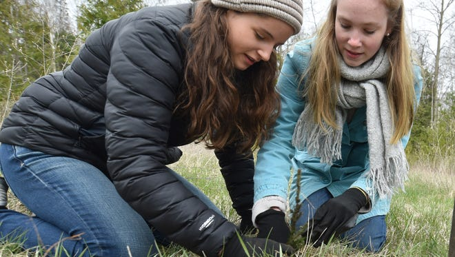 Gibraltar High School Ecology Club freshmen Amanda Surges, left, and Malin Anderson plant white spruce seedlings on Arbor Day, Friday,in the Schoenbrunn Nature Conservancy near Ellison Bay.