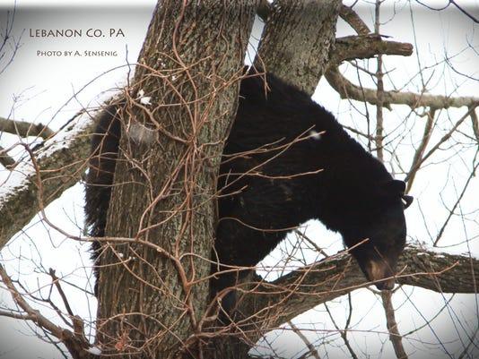 636498129945298992-christmas-bear-7.jpg