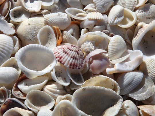 A variety of shells washed up on the beach near the