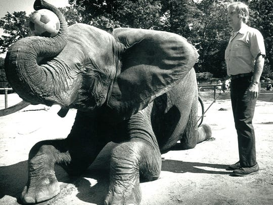 Tombi, an African elephant, was a popular attraction at Lansing's Potter Park Zoo. She moved to the Indianapolis Zoo in 1989.