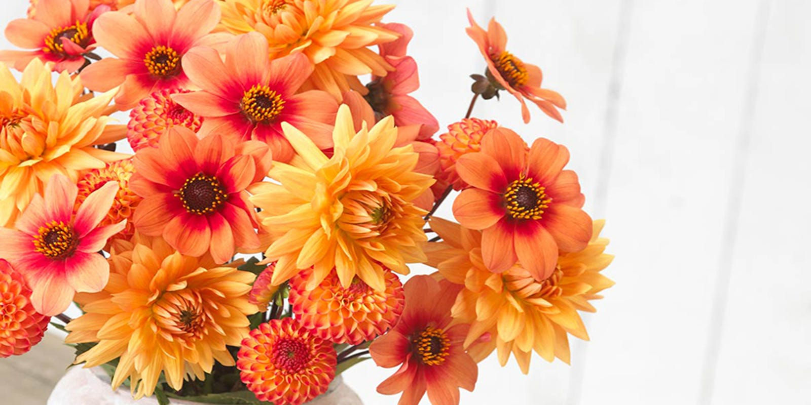Add Some Garden Pizzazz To Your Landscape With Easy Care Dahlias
