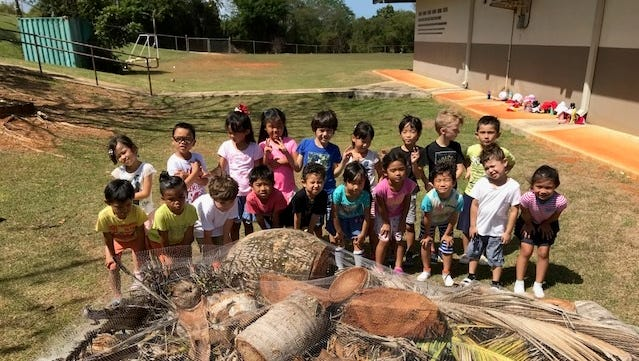 The kindergarten class took part in dealing with the environmental issue caused by the Rhino Beetles throughout the Japanese School of Guam campus. Many infested coconut trees were cut down and traps were set to exterminate beetles at the school. Pictured front row from left: Hideyoshi Duque, Sky Domingo, Ave Benitez, Asahi Perez, Wren Hofman, Sae Koda, Emma Pulmones, Wataru Yano, Immanuel Moore, Olivia Dacanay. Back row:  Mihana Kimura, Kota Camacho, Kelli Tokito, Kai Domingo, George Fiedler, Riko Doman, Mizuki Abe, Weston Bodell, Yuma Mendiola