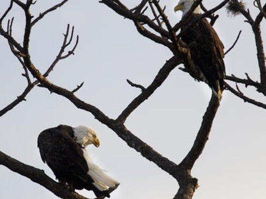 EAGLE-PIC.jpg