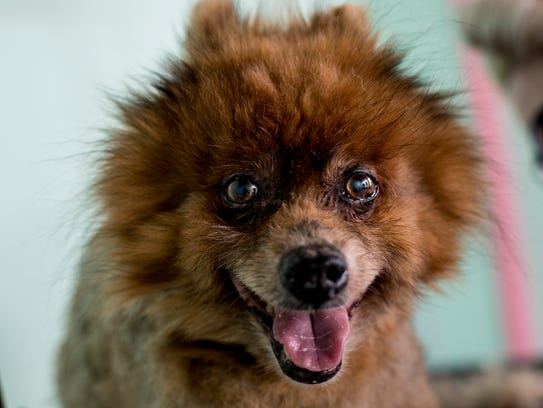 Rusty and other dogs are required to be licensed.