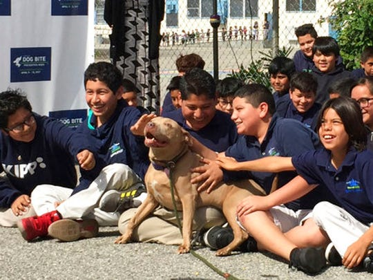 """A pit bull named """"Lucy"""" is pet by school children as"""
