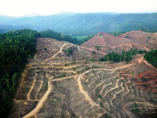 Deforestation in Sumatra. Habitat loss due to logging