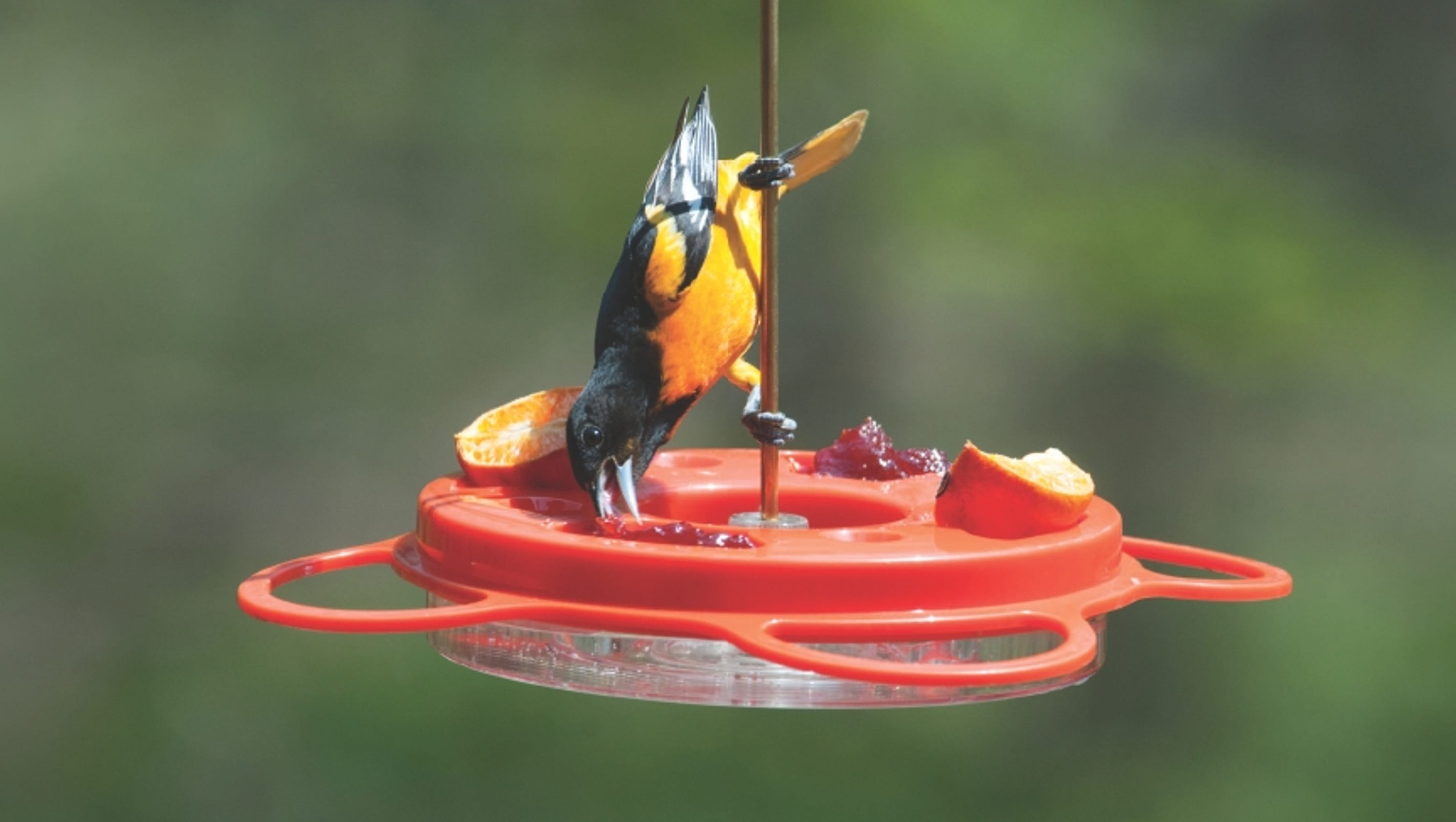 feeders the feeder oriole bird buy best in to