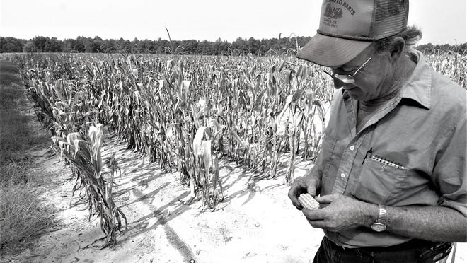 Drought can bring ruin to summer crops.