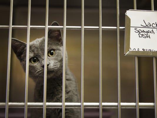 Scottsville Animal Adoptions