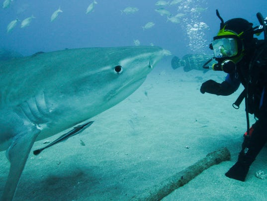 discovery s shark week gets back to reality