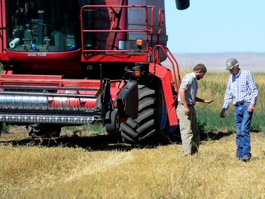 Harvest, big photo