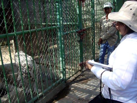 La Profepa llevó a cabo una imnspección en el zoolgógico