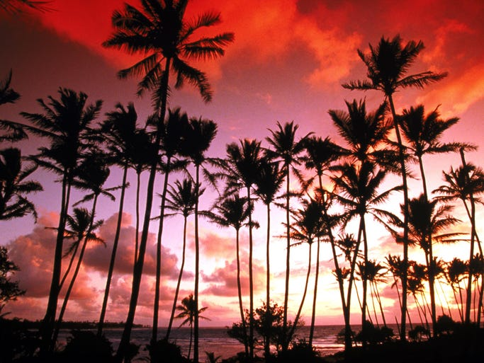 <p>Fifty-five years ago, the United States added its 50th state. As Hawaii celebrates its anniversary, take a spin through captivating photos from the waters, beaches and volcanoes from the state's eight main islands, kicking off with a view of palm trees in Wailua, Kauai.</p>