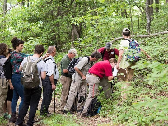 A BioBlitz group takes a closer look at wildlife inside the Pisgah National Forest.