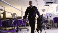 Marijuana legalization could mean problems for the state's K-9 cops, many of which are already trained to find pot.
