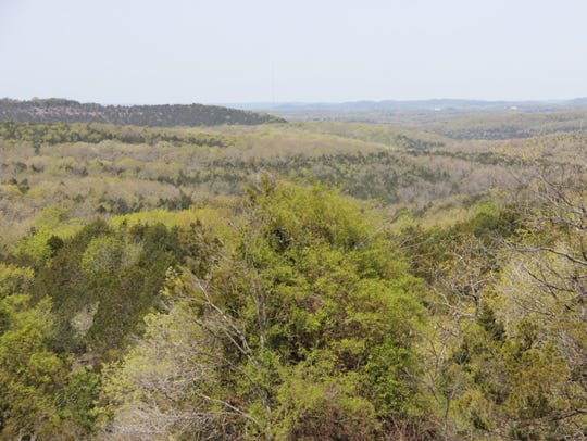 Hercules Glades Wilderness Area encompasses 12,314