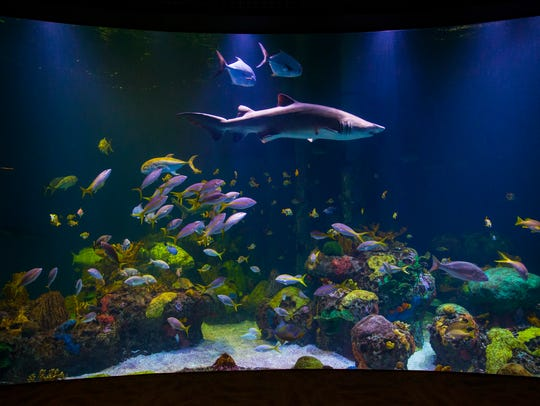 A shark tank teeming with colorful coral and saltwater