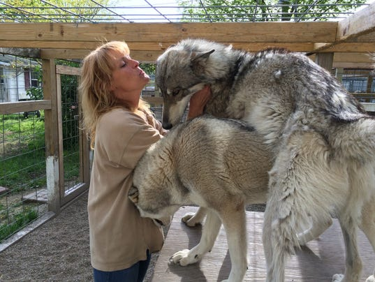 Wolfdogs-1.jpg