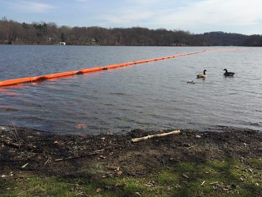 Geese on Pompton Lake