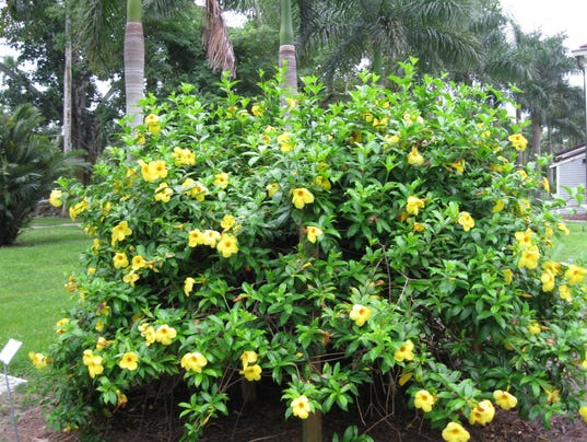 Inventing your garden plants for hot sunny florida for Southwest landscaping plants