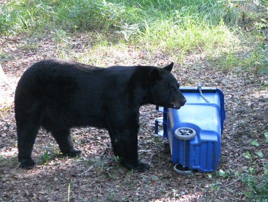 Bear Spotted In Gulf Breeze Proper