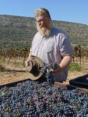 Tommy Waller, executive director of Hayovel Serving Israeli Farmers, holds grapes harvested by American evangelicals in the West Bank settlement of Dolev.