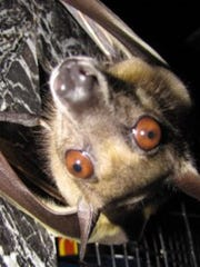 The Bats Alive interactive program will be atFlat