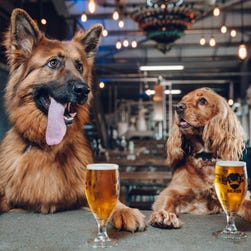 Brewery offers paid 'paw-ternity' leave for employees
