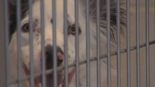 A national movement to reduce the number of animals killed in shelters is trying to make its way into Colorado.
