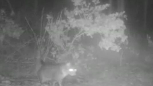 A photo taken from video shows a cat that was able to dodge an alligator's attack.