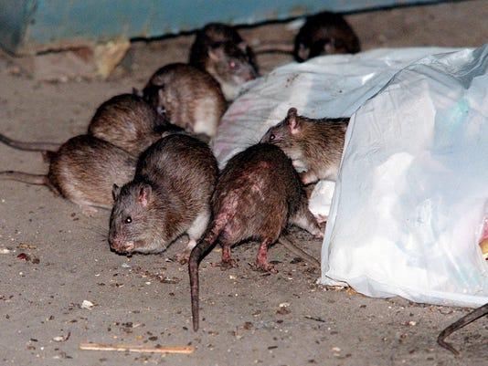 AP SUPERSTORM RATS A FILE USA NY