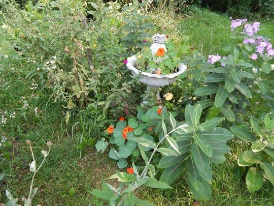 """Gardening Guru"" Barbara Klimkowski adds native plants to her yard, including milkweed, nasturium and phlox, to attract wildlife."