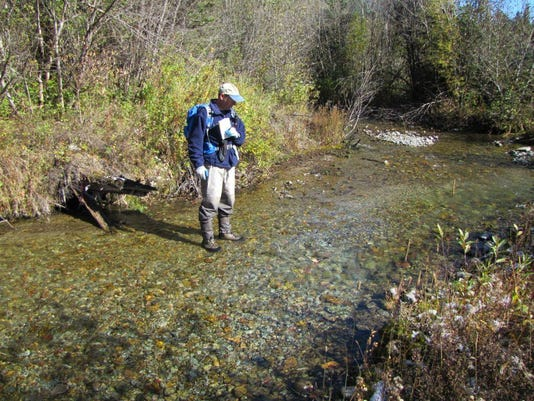 1130 Bull trout spawning numbers.jpg