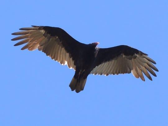 APC 100914 Yard MD BLOG-Fall wildlife 2.JPG