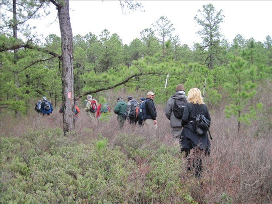 Hikers walk along the Batona Trail in South Jersey's Pine Barrens.