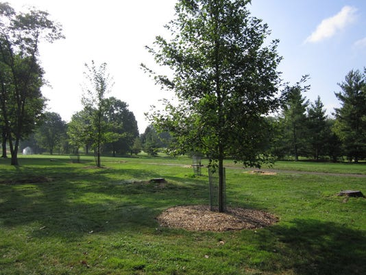 ashtrees.JPG