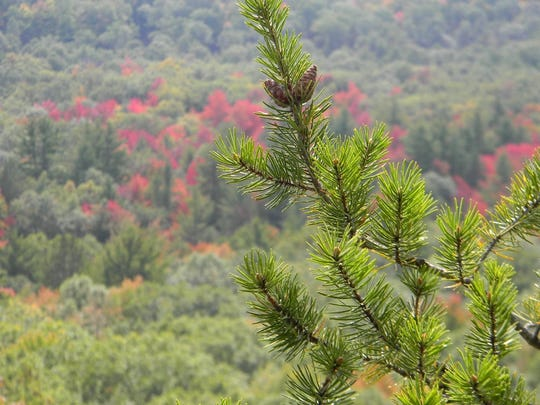A spectacular view of trees and the colorful leaves is a great sight to see at the top of Wildcat Mound.