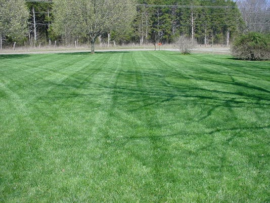 Mote Grass 3-29-15.JPG