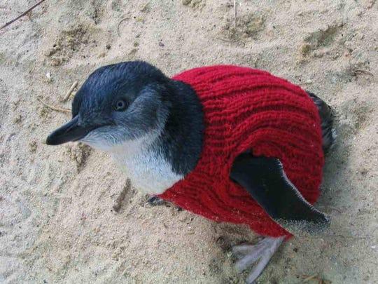 Penguin red jumper lr
