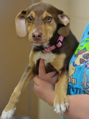 Peanut, a former shelter dog in Michigan is credited this week with saving a 3-year-old girl's life. Peanut's new owner wrote Delta Animal Shelter to saying the girl was found in a field curled up in a ball, naked and shivering near Rapid River, Mich.