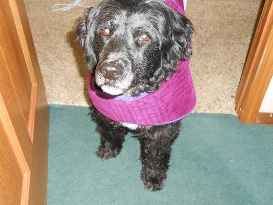 Dog wears coat