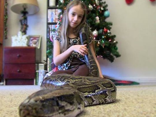 Jamie Guarino's daughter, Krista, 9, shown with Nay-Nay, a 13-foot python. He said both girls have a passion for the snakes. Guarino's own YouTube channel includes several videos of his daughters with snakes, and features the family seeking snakes outdoors.