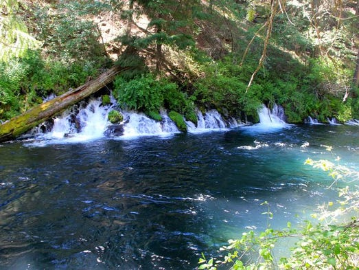 Springs rumble into the Metolius River and can be seen from the Metolius River Trail.