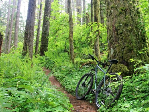 The Perimeter Trail winds through some dense forest in Silver Falls State Park.