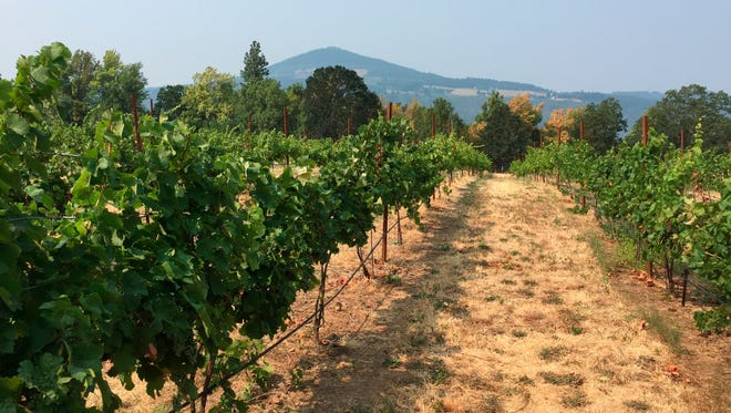 This Aug. 11, 2017 photo shows the vineyards at Cathedral Ridge Winery in Hood River, Ore., in the Columbia River Gorge.