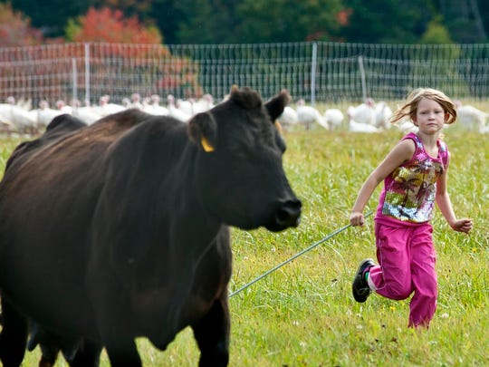 The family operators of Tangletown Farm in West Glover, including daughter Willa, 7, move their herd from one pasture to another in late September.